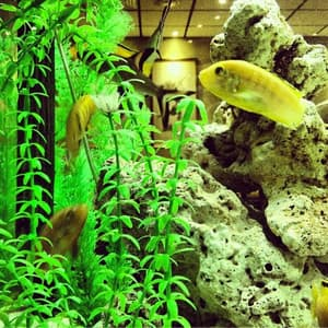 Big fish tank to admire while your waiting for your meal 