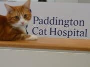 True Local: Paddington Cat Hospital Image