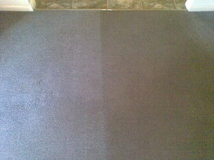 standard carpet steam cleaned