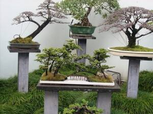 True Local: Chinese Garden of Friendship Image
