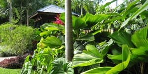 Tropical garden ideas queensland perfect home and garden for Garden designs queensland