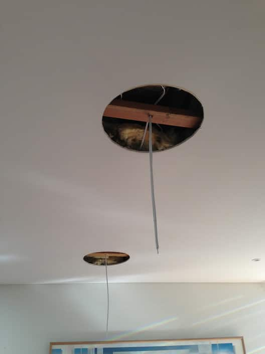 That's Electrical Pty Ltd Pic 1 - With Summer approaching a lot of our clients have requested ceiling fans to be installed All fans have an option of Remote control Where theres a will theres a way