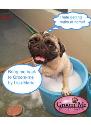 Groom-me by Lisa-Marie Pic 4 - Every dog loves Groomme by LisaMarie