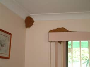 Bryce Pest Control Pty Ltd Pic 4 - Termite mudding in a lounge room