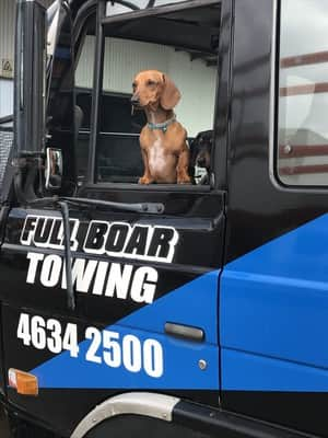 Full Boar 4WD Pic 3 - TRUCK DOG HARD AT WORK
