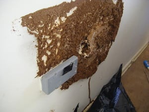 Childs Property Inspections Pic 4 - Active termites inside bedroom wall