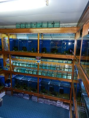 Annerley Aquarium Pic 2 - Alcove Betta Section Australian Natives Section