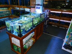 Annerley Aquarium Pic 3 - Plant Tank and Back Section
