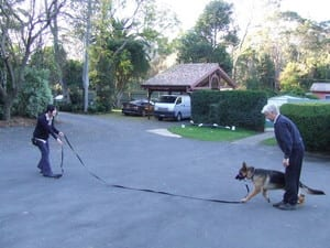 Advanced K9 Communications Pic 5 - Training the recall with Steve Austin Australias best dog trainer