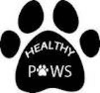 Healthy Paws Dog Grooming In Ermington Sydney Nsw Pet
