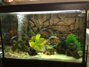 Minto Pets Pic 4 - fish quarium products