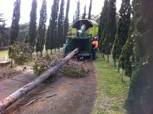 Hills District Stump Grinding Pic 5 - wood chipping a whole tree at Dural