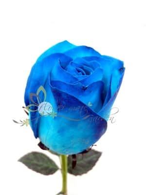 Flower Mate Garden Pic 3 - Blue roses