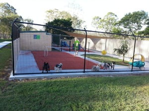 Animal World Pet Resorts - Park Ridge Pic 3 - Australias first tennis court built for just for your dogs fun and enjoyment