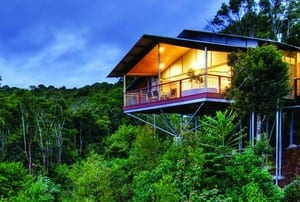 O'reilly's Rainforest Retreat Pic 4