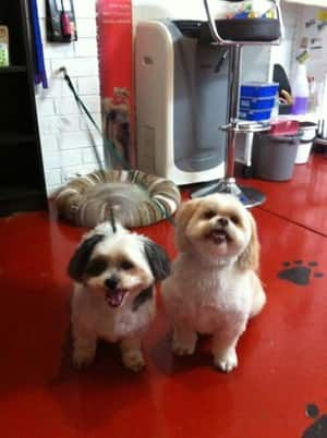 Michelle's 'Clip N Snip' Dog Grooming Pic 5