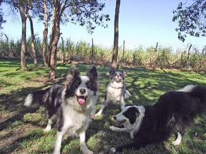 Alida's Pet Resort Pic 2 - Dog Exercise Yard
