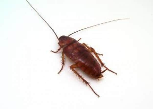Alldone Pest Control Pic 1 - We supply 12 month written warranties on cockroaches and silverfish excluding German cockroach infestations