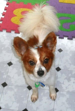 Tinas dog grooming in maudsland qld pet groomers truelocal add photo solutioingenieria Gallery