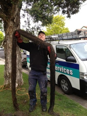 Les Taylor Plumbing Services... Pic 5 - Tree roots remove from storm water drain to clear blockage in storm water drain Coburg Vic