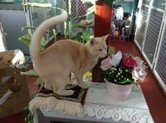 Blue Mountains Pet Resort Pic 4 - What luxury even fresh roses for a sweet little pussy to smell