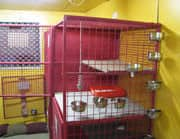 Cordelia Pet Care Centre Pic 1 - Our Cattery And Free Area