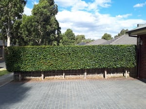 L.C Mowing & Garden Maintenance Pic 4 - This trimmed hedge really has improved the overall presentation of this property