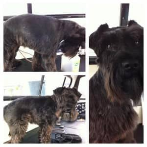 Wags Dog Grooming Services In Kings Park Melbourne Vic