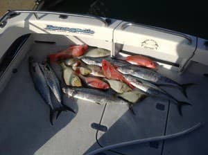 Renegade Fishing Charters Pic 4 - Mixed bag